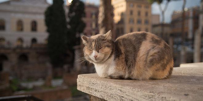 gatti di roma le colonie feline più famose